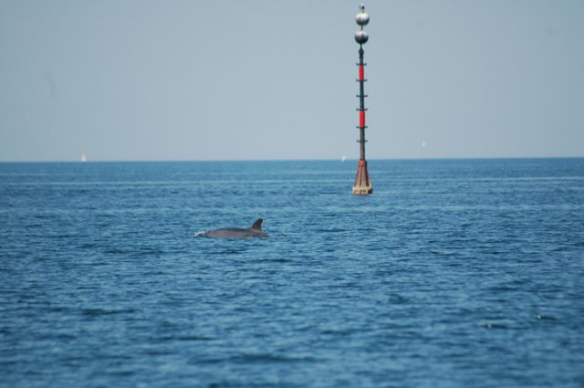 dolphins sept10 002